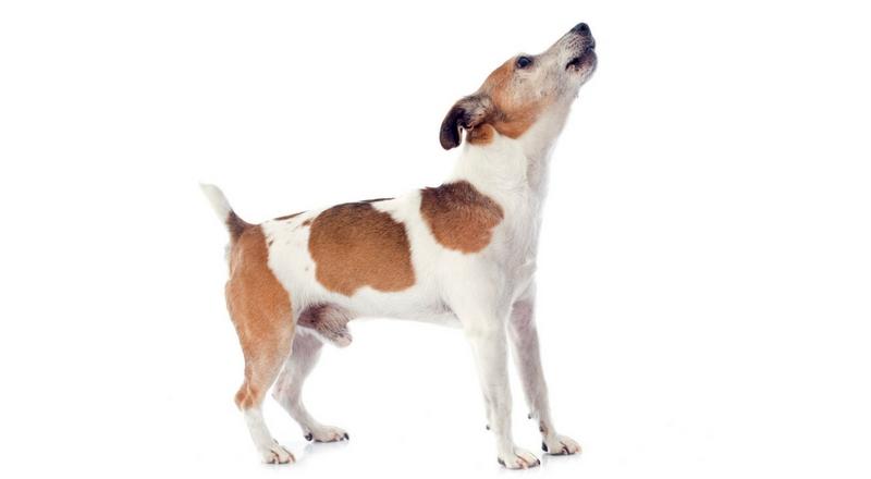 10 Möglichkeiten, wie man einen Hund vom Bellen abhält