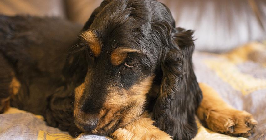 Was ist Gegenkonditionierung beim Hundetraining?