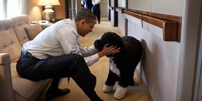 Celebrity Dog Names - tolle Liste von 55+ Promis & Hunden