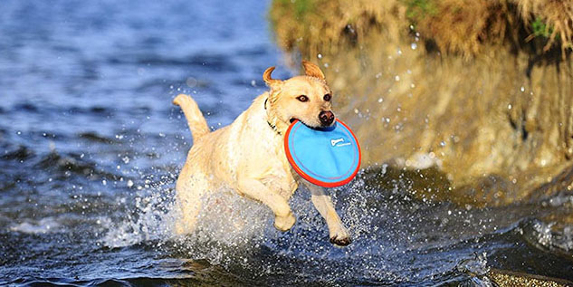 Best Outdoor Toys for Dogs – 15 Perfect Picks
