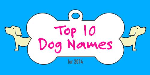 Top 10 Hundenamen Infografik