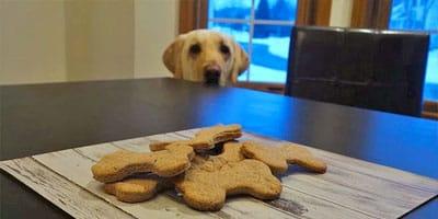 Selbst gemachtes fettarmes Hundefestlichkeits-Rezept
