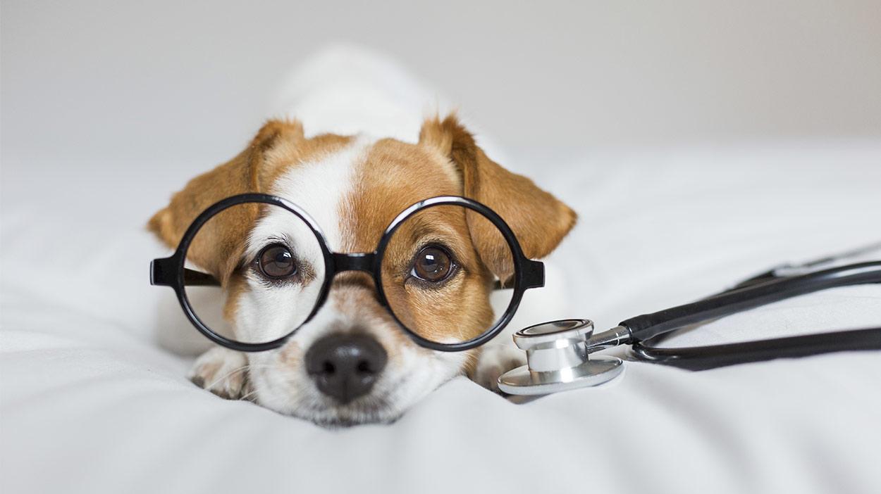 Kolloidales Silber für Hunde - funktioniert es wirklich?