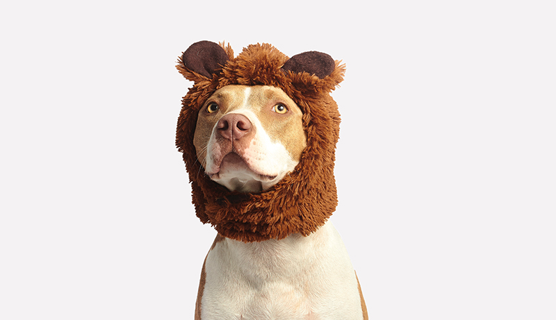 110+ Dog Puns - die beste Doggone-Liste
