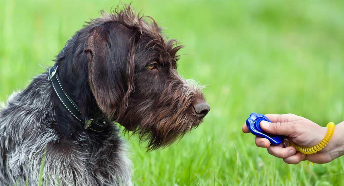Best Dog Training Treats für eine super erfolgreiche Trainingseinheit