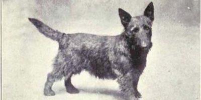 Scottish Dog Names - 100+ Awesome Namensideen für Ihren Hund