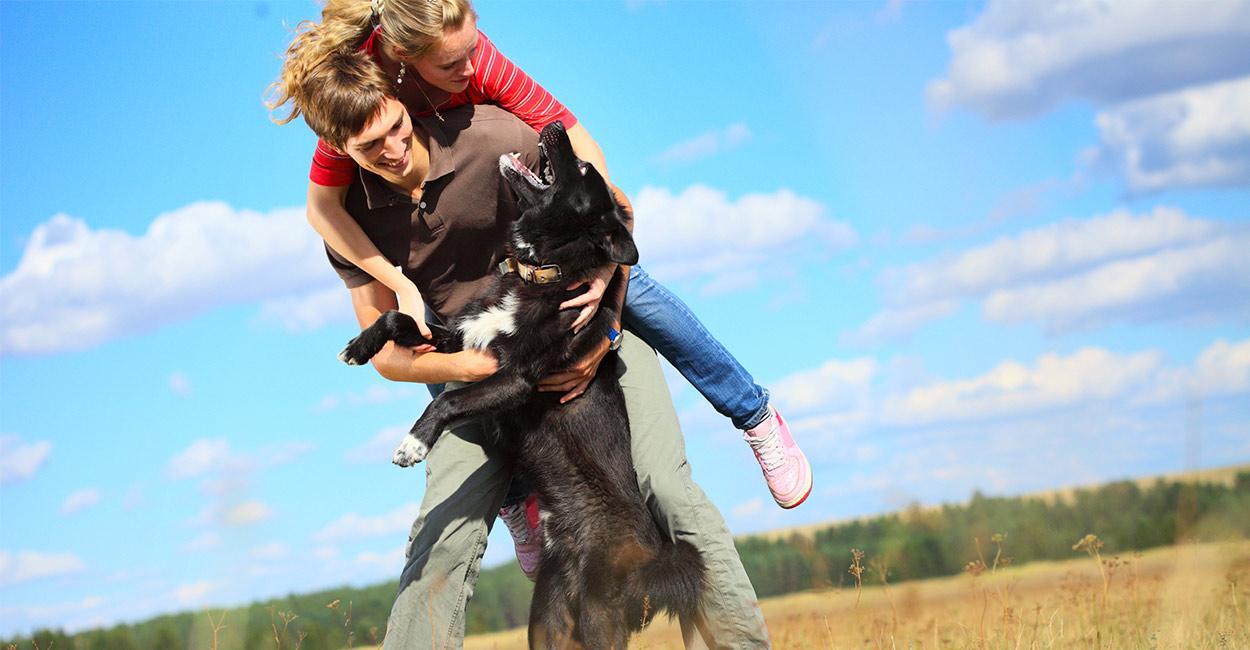 Wie man einen Hund aufhört zu springen
