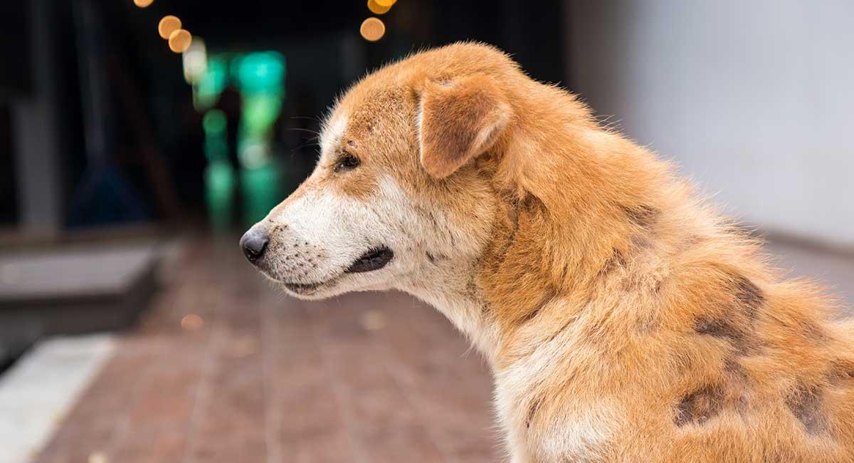 Warum hat mein Hund Haare und was soll ich tun? Ein Tierarzthandbuch