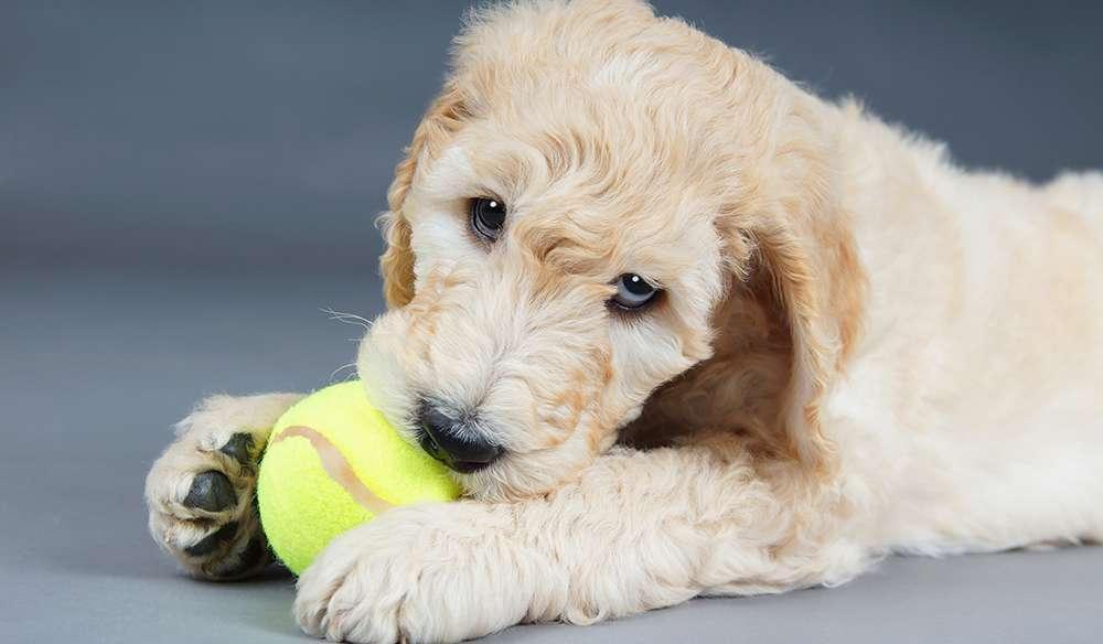 So trainieren Sie einen frechen Hund: 3 Regeln, die Ihnen helfen