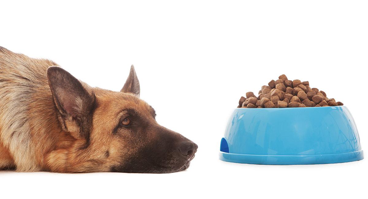 Bestes Hundefutter für Deutsche Schäferhunde mit empfindlichen Mägen
