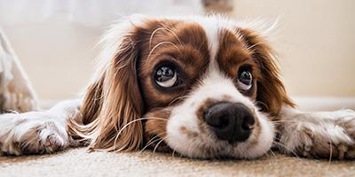 Was tun, wenn dein Haus nach Hund riecht?