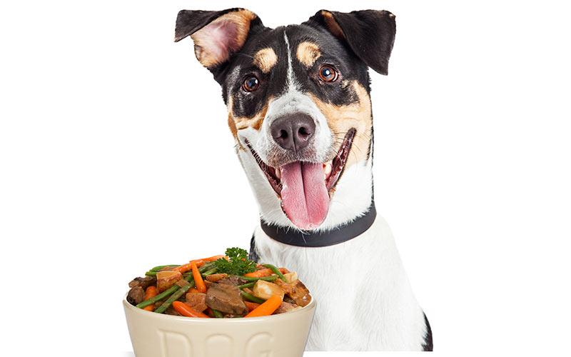 Können Hunde grüne Bohnen haben?