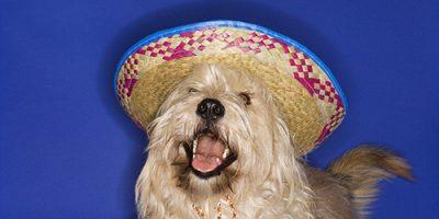 100+ mexikanische Hundenamen - die ultimative Liste