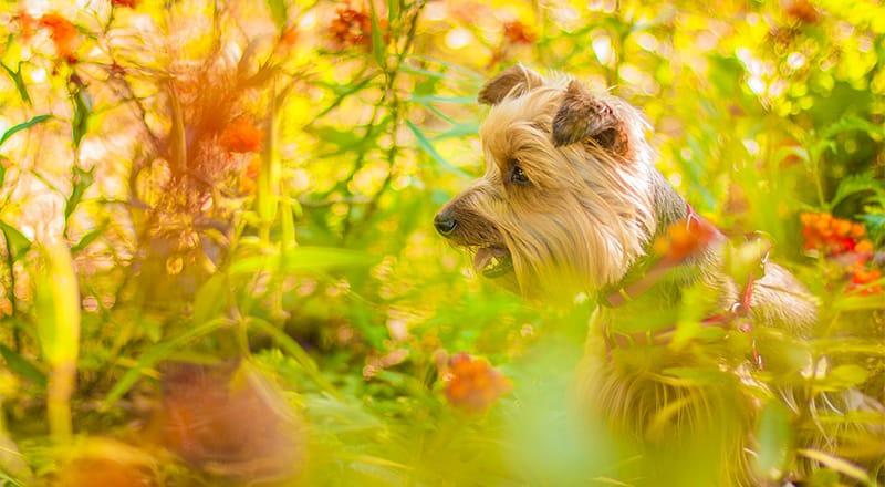 In acht nehmen! 21 Gemeinsame Pflanzen für Hunde giftig
