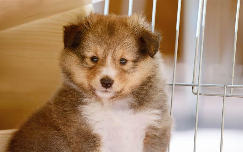 Die besten Indoor Puppy Playpens