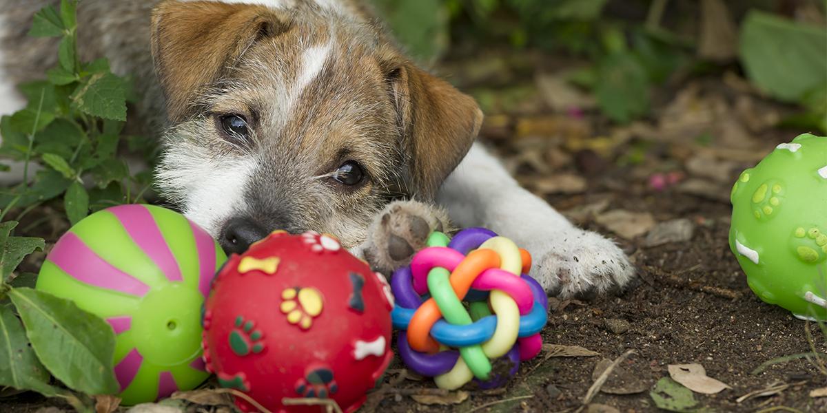 Welpenspielzeug: Das beste Hundespielzeug für Welpen
