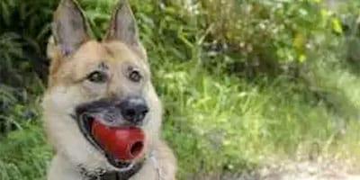 40+ leckere KONG-Füllungen, die Ihr Hund verschlingt