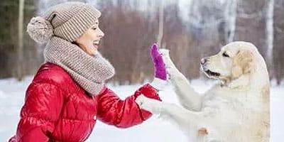 Einfache Möglichkeiten, die Pfoten der armen Welpen im Winter zu schützen