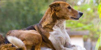 Elegante Hundenamen - zeitlos und verfeinert