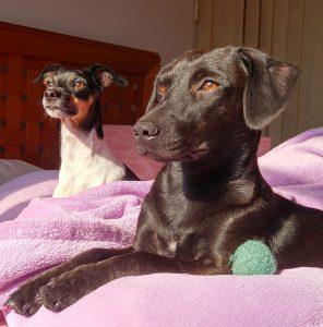 7 geniale Möglichkeiten, Ihren Hund zuhause zu trainieren