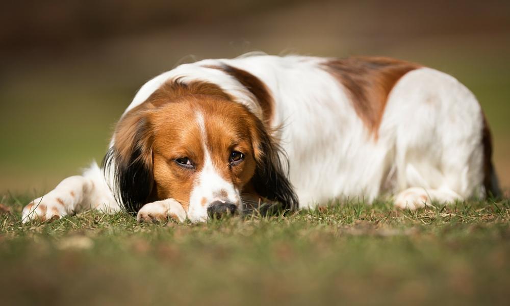 Dog Training Discs, Rasselflaschen und Haustier-Korrektoren
