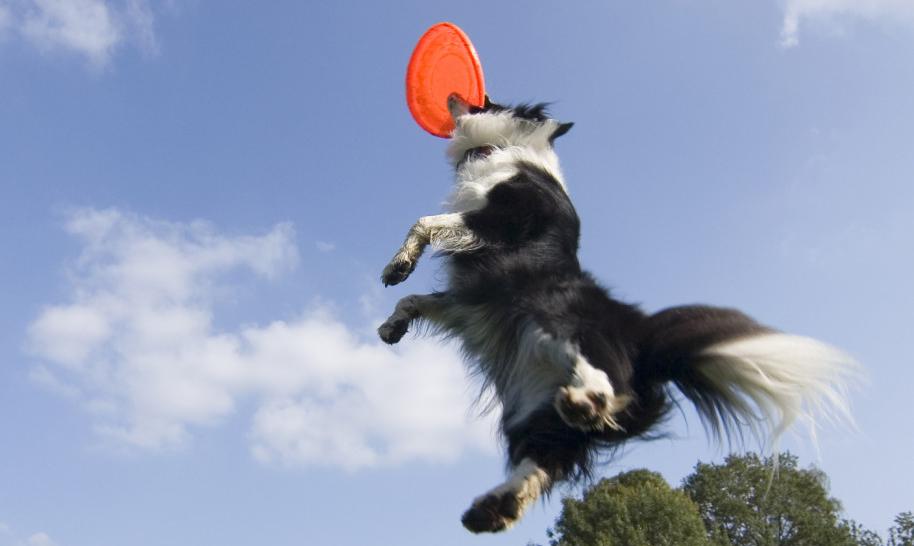 10 Top Dog Training Youtube-Kanäle