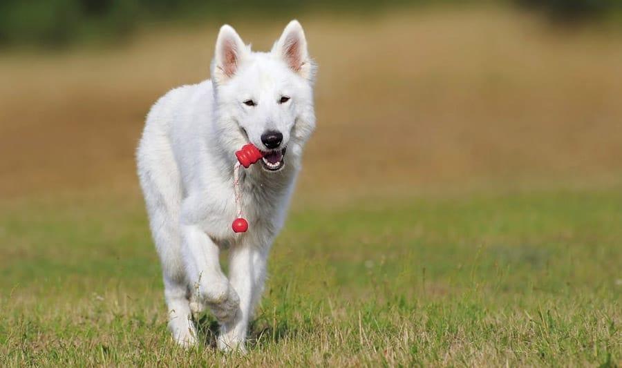 Weiße Hundenamen - 65 tolle Ideen für weiße Furbabies