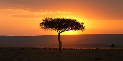 Afrikanische Hundenamen - 131 Exotische, einzigartige Ideen für Ihren Welpen
