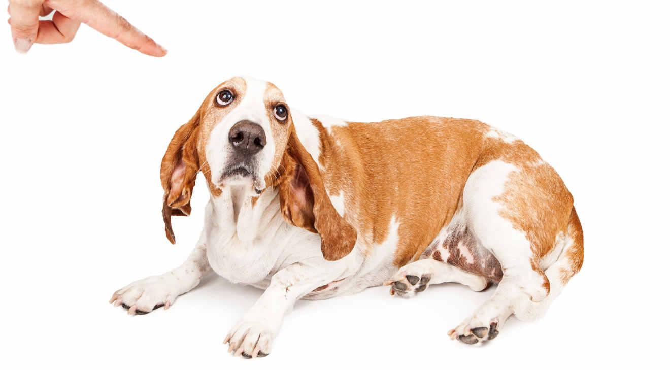 Bestrafung im Hundetraining