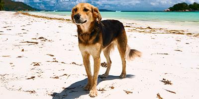 Hawaiian Dog Names - 150+ Schöne, einzigartige Ideen!