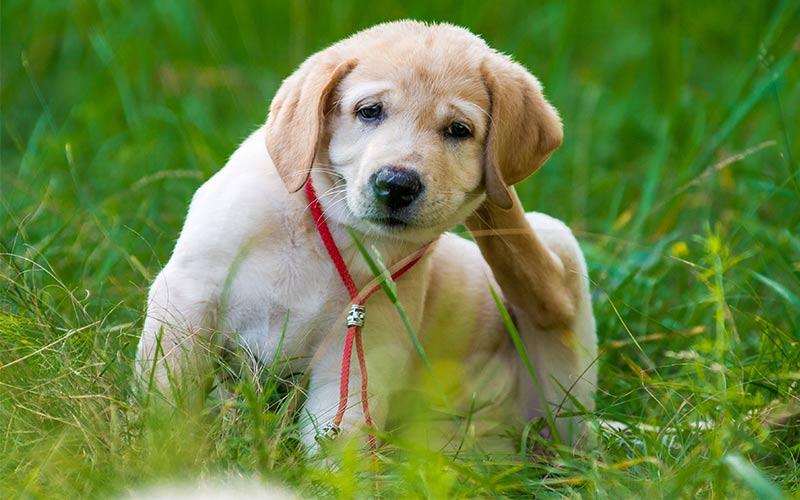 Kokosnussöl für Hunde
