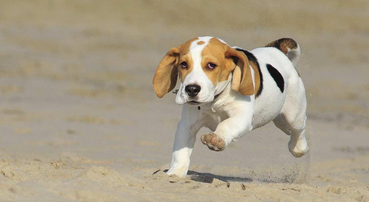 Annahme gegen den Kauf eines Hundes oder eines Welpen
