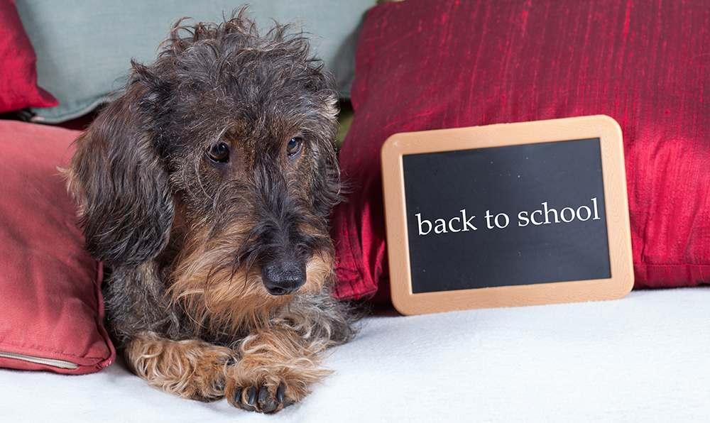 Hundetraining mit Leckereien - Ist Essen wirklich notwendig?