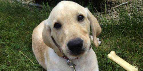 9 unzerstörbare Hundespielzeug