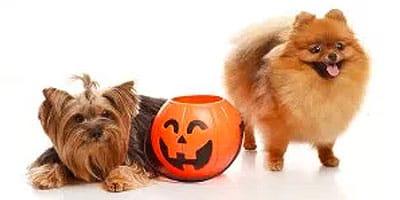 10 Möglichkeiten, Halloween mit deinem Hund zu feiern