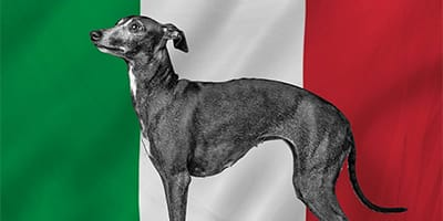 85+ italienische Hundenamen, die Bellissimo sind!