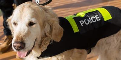 Starke und mutige Namen für Polizeihunde