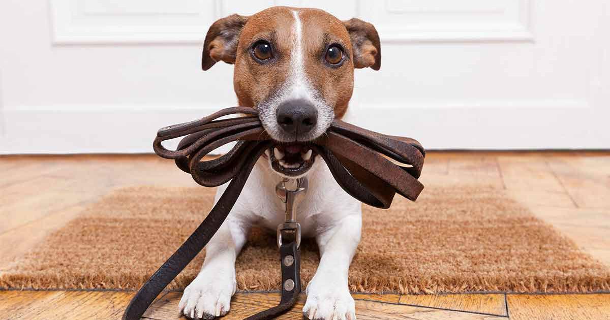 Hinterbeinschwäche bei Hunden - Zeichen und Behandlungen