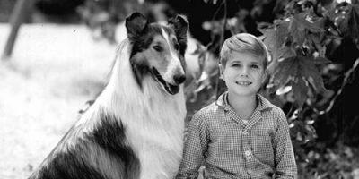 Hundenamen aus Film und Fernsehen