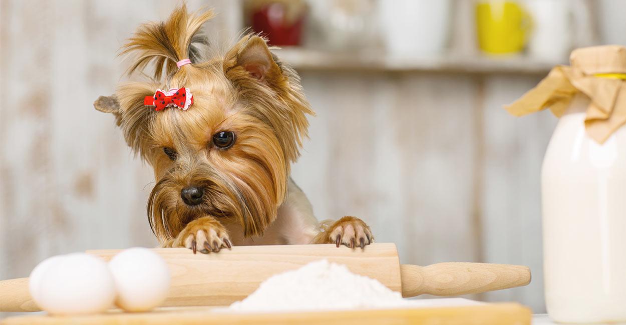 Hunde-Cupcake-Rezepte