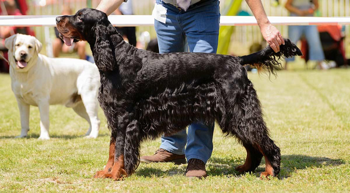 Hundebestimmung - Definition, Zweck und Probleme