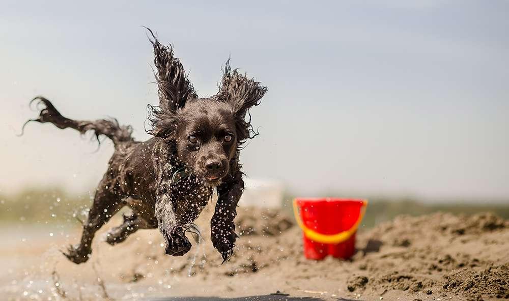 Hundetraining: Was tun, wenn Leckereien nicht funktionieren?