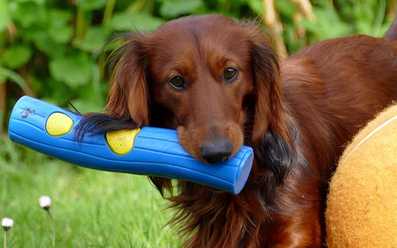 Bestes interaktives Hundespielzeug