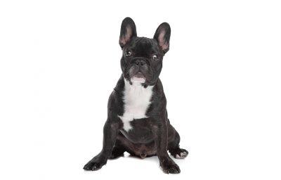 Verrückte coole schwarze und weiße Hundenamen - 37 perfekte Ideen!