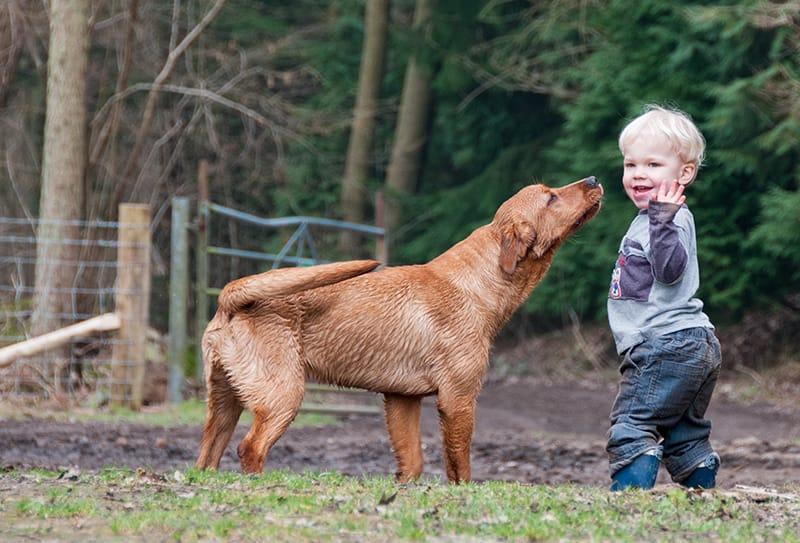 225+ Labradornamen - Die ultimative Liste!