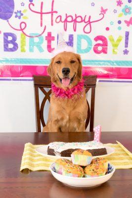 7 lustige Möglichkeiten, um den Geburtstag Ihres Hundes zu feiern
