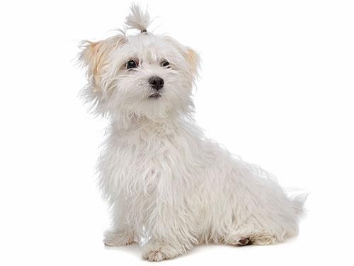 13 tolle Rassen für faule Hundeliebhaber