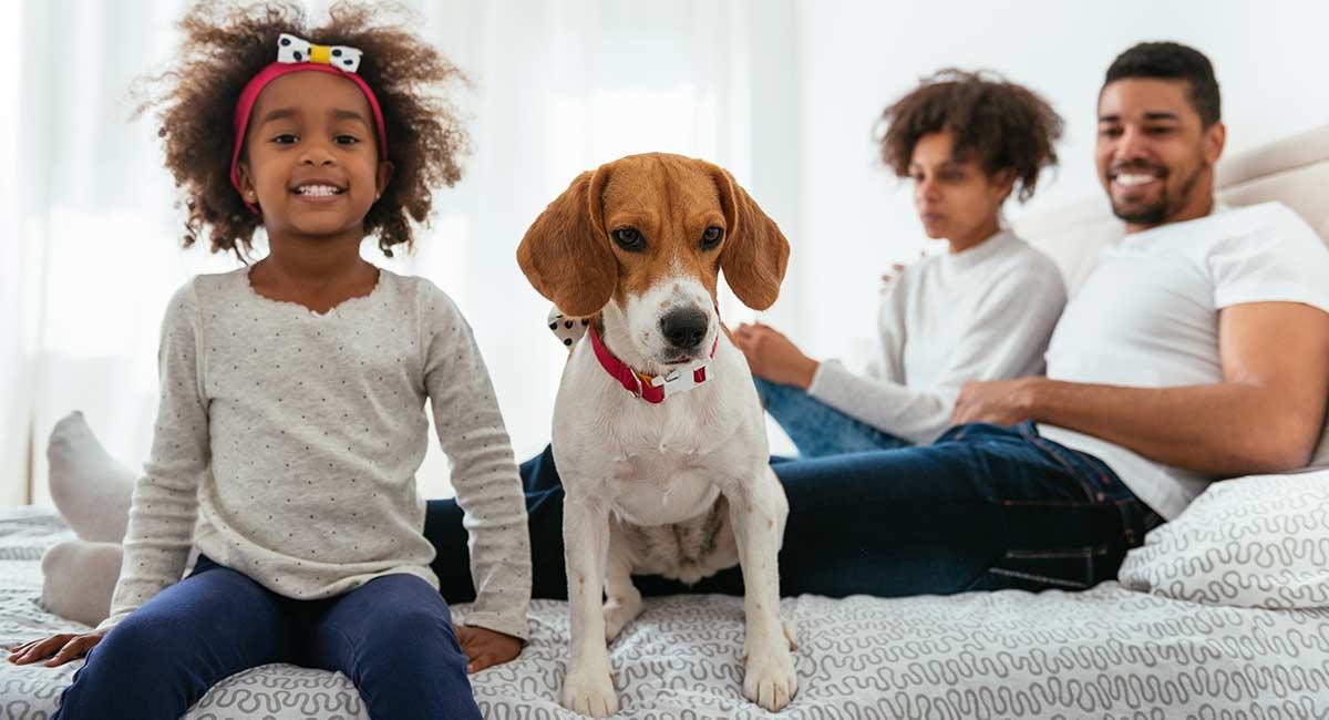 Dog Sharing - brillante Idee oder problematische Wahl des Lebensstils?