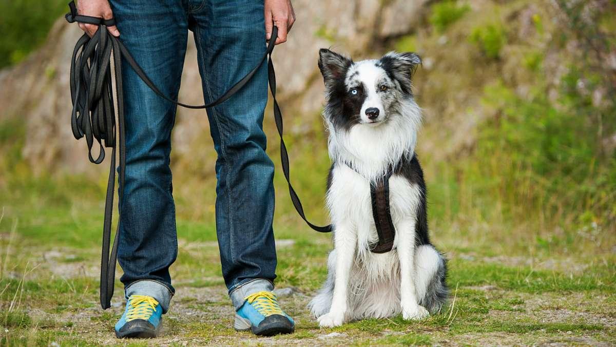 Die besten Methoden für das Hundetraining - die richtige Art und Weise, Ihren Welpen zu trainieren