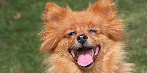 Wie man einem Hund seinen Namen beibringt - Awesome Guide für Ihren neuen Hund